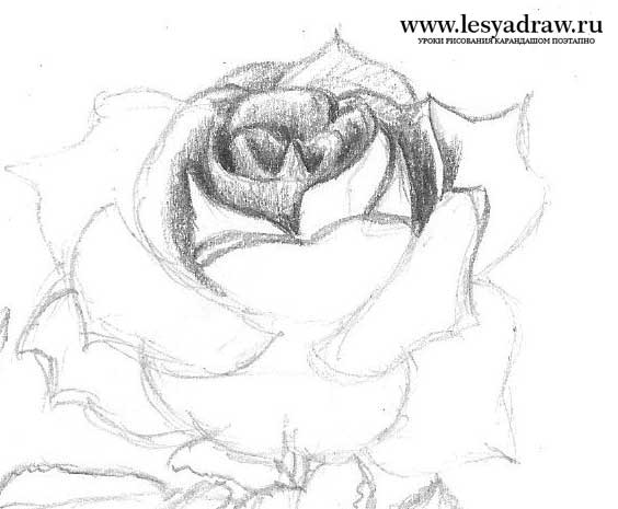 Cara Menggambar Bunga Dalam Pot Cara Menggambar Bunga Mawar